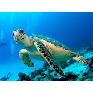 4D3N Bali Island Romantic Tour Package + Turtle Island